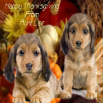 thanksgivingpuppies